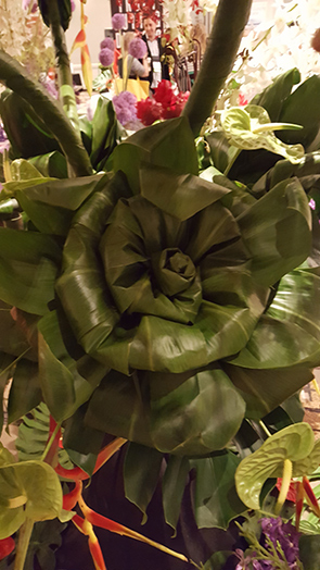 Green Aspidistra, Monstera